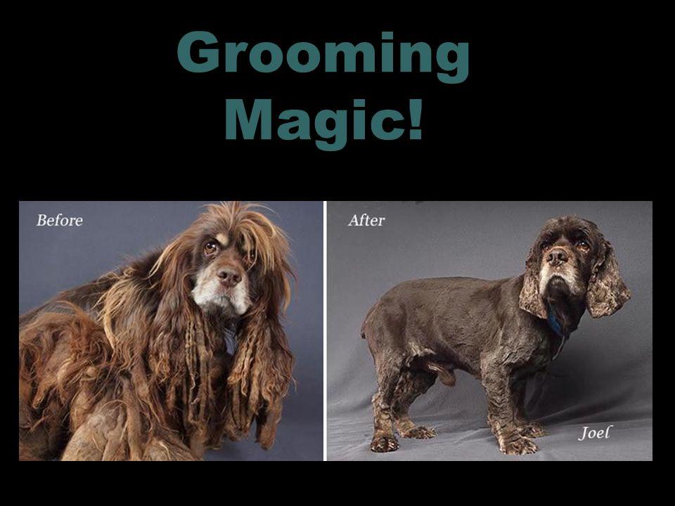 Grooming Magic! 15