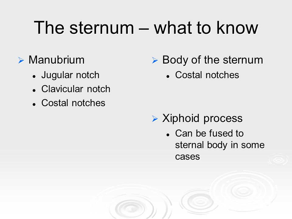 The sternum – what to know  Manubrium Jugular notch Jugular notch Clavicular notch Clavicular notch Costal notches Costal notches  Body of the sternum Costal notches  Xiphoid process Can be fused to sternal body in some cases