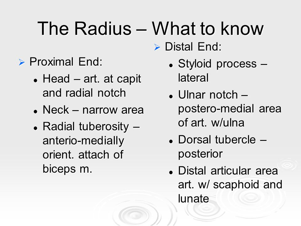 The Radius – What to know  Proximal End: Head – art.