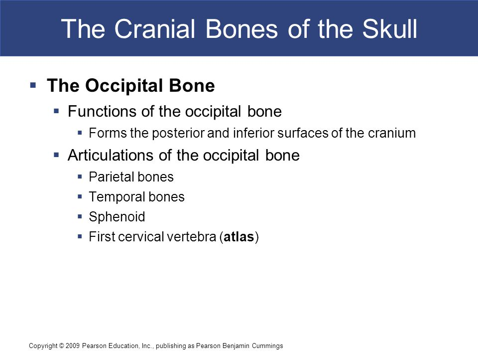 Copyright © 2009 Pearson Education, Inc., publishing as Pearson Benjamin Cummings The Cranial Bones of the Skull  The Occipital Bone  Functions of the occipital bone  Forms the posterior and inferior surfaces of the cranium  Articulations of the occipital bone  Parietal bones  Temporal bones  Sphenoid  First cervical vertebra (atlas)