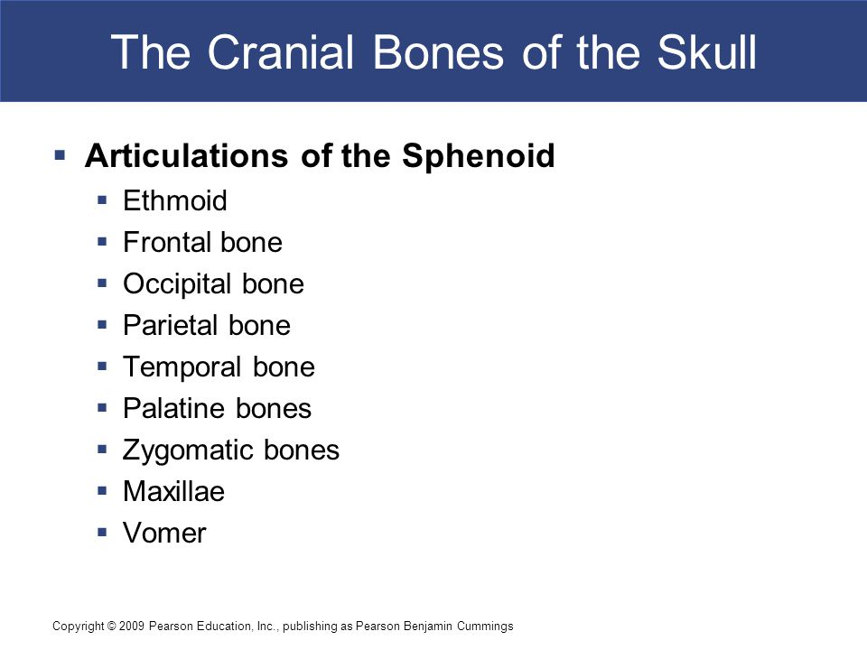 Copyright © 2009 Pearson Education, Inc., publishing as Pearson Benjamin Cummings The Cranial Bones of the Skull  Articulations of the Sphenoid  Ethmoid  Frontal bone  Occipital bone  Parietal bone  Temporal bone  Palatine bones  Zygomatic bones  Maxillae  Vomer