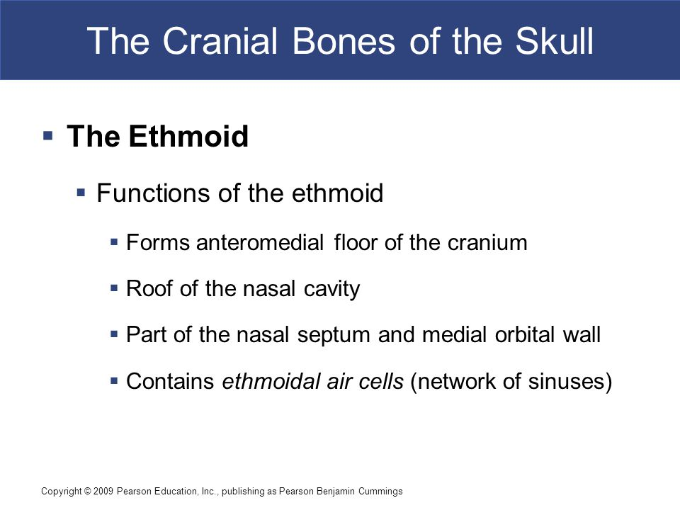 Copyright © 2009 Pearson Education, Inc., publishing as Pearson Benjamin Cummings The Cranial Bones of the Skull  The Ethmoid  Functions of the ethmoid  Forms anteromedial floor of the cranium  Roof of the nasal cavity  Part of the nasal septum and medial orbital wall  Contains ethmoidal air cells (network of sinuses)