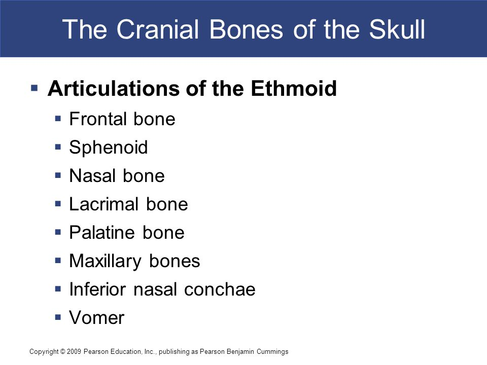 Copyright © 2009 Pearson Education, Inc., publishing as Pearson Benjamin Cummings The Cranial Bones of the Skull  Articulations of the Ethmoid  Frontal bone  Sphenoid  Nasal bone  Lacrimal bone  Palatine bone  Maxillary bones  Inferior nasal conchae  Vomer