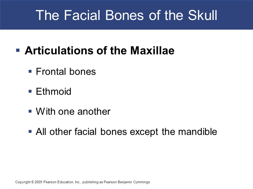 Copyright © 2009 Pearson Education, Inc., publishing as Pearson Benjamin Cummings The Facial Bones of the Skull  Articulations of the Maxillae  Frontal bones  Ethmoid  With one another  All other facial bones except the mandible