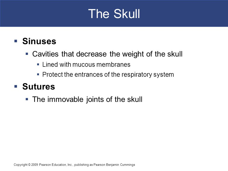 Copyright © 2009 Pearson Education, Inc., publishing as Pearson Benjamin Cummings The Skull  Sinuses  Cavities that decrease the weight of the skull  Lined with mucous membranes  Protect the entrances of the respiratory system  Sutures  The immovable joints of the skull