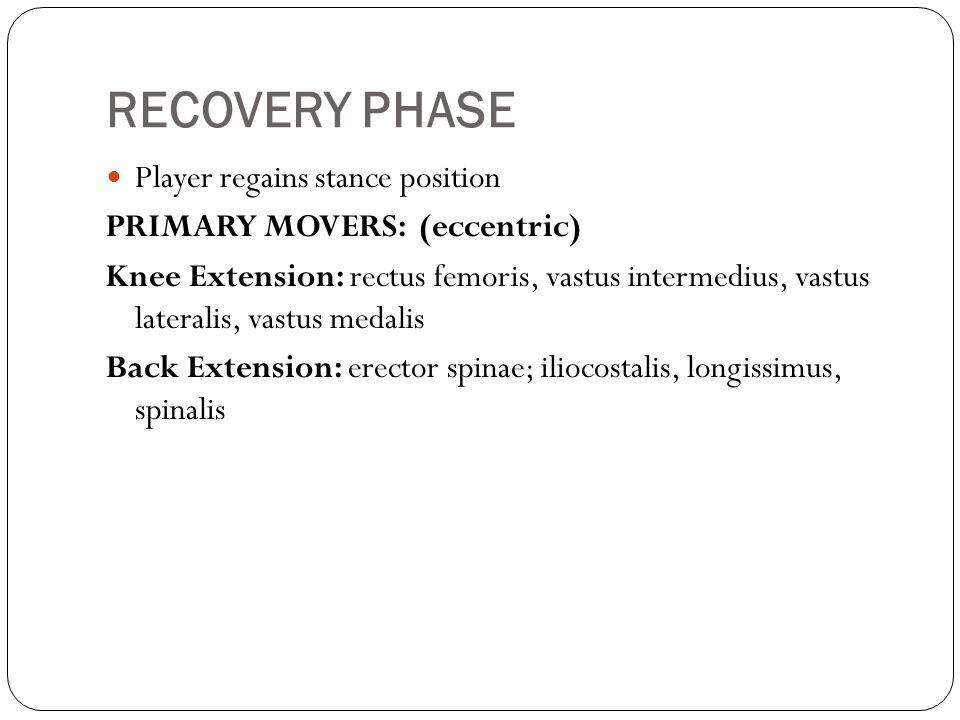 RECOVERY PHASE Player regains stance position PRIMARY MOVERS: (eccentric) Knee Extension: rectus femoris, vastus intermedius, vastus lateralis, vastus