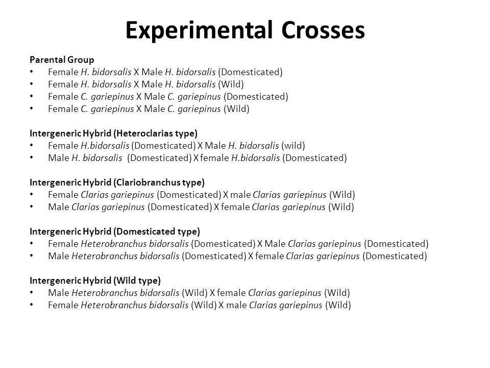 Experimental Crosses Parental Group Female H. bidorsalis X Male H.