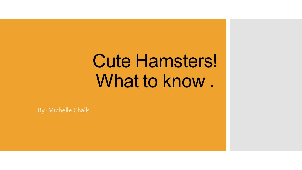 Cute Hamsters! What to know. By: Michelle Chalk
