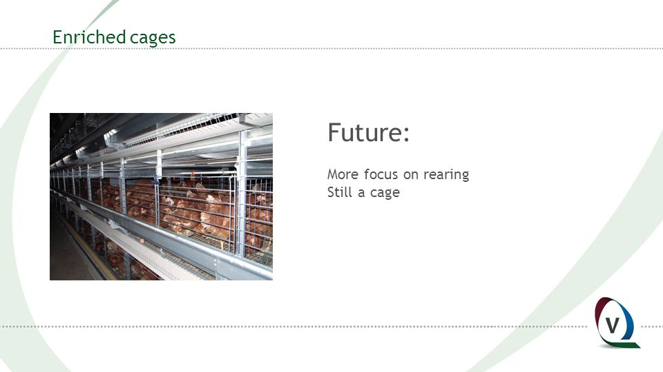 Enriched cages Future: More focus on rearing Still a cage