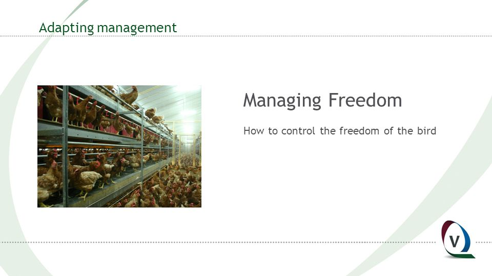 Adapting management Managing Freedom How to control the freedom of the bird