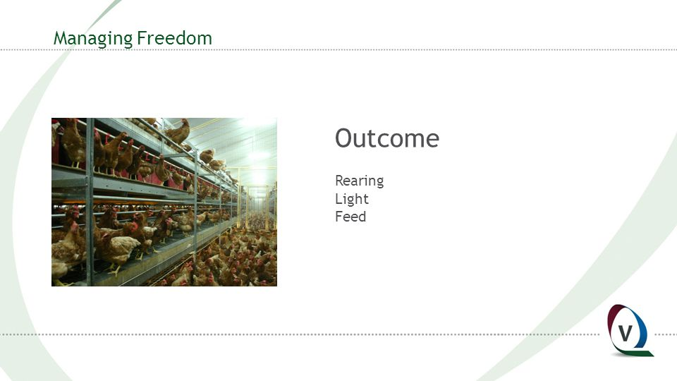 Managing Freedom Outcome Rearing Light Feed