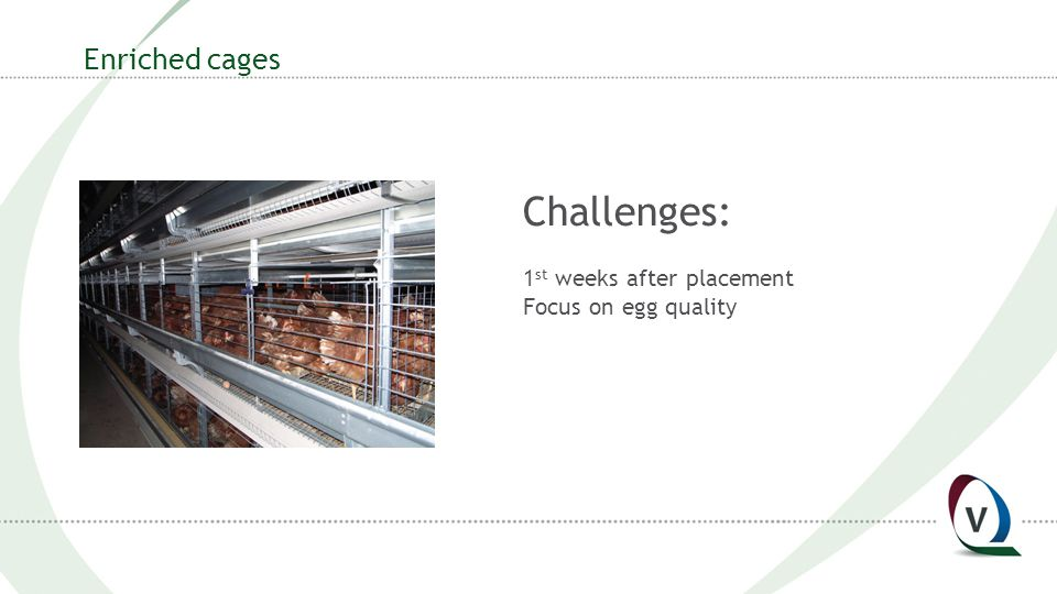 Enriched cages Challenges: 1 st weeks after placement Focus on egg quality