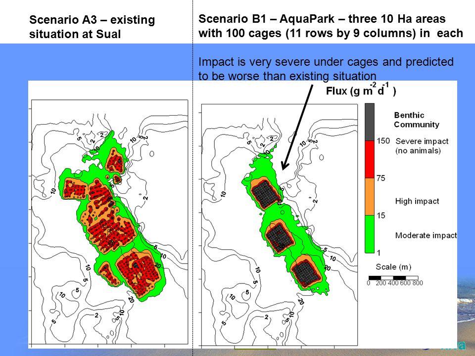 Scenario A3 – existing cage layout Scenario B3 – AquaPark scenario Three 10 ha areas 56 cages per 10 ha 100 m space in middle of blocks to allow flushing Scenario B2 – AquaPark scenario Three 10 ha areas 40 cages per 10 ha 100 m space in middle of blocks to allow flushing Scenario B1 – AquaPark scenario Three 10 ha areas 100 cages per 10 ha No space in the middle of the zone TROPOMOD cage layouts