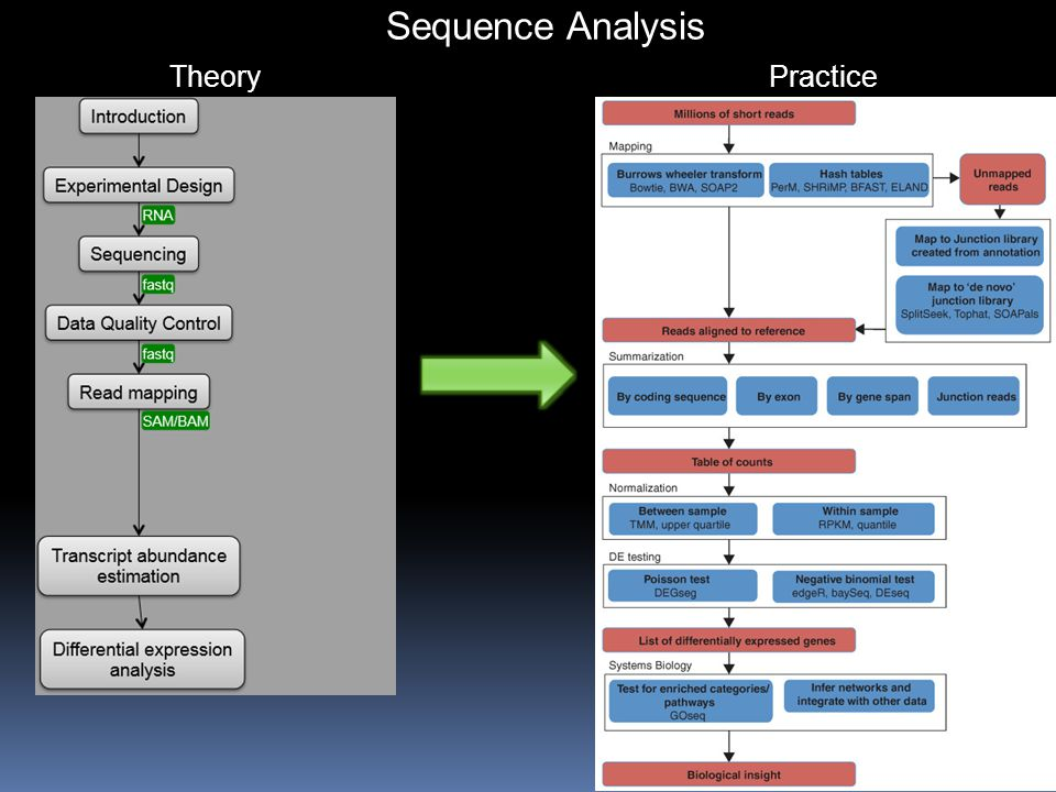 Sequence Analysis TheoryPractice