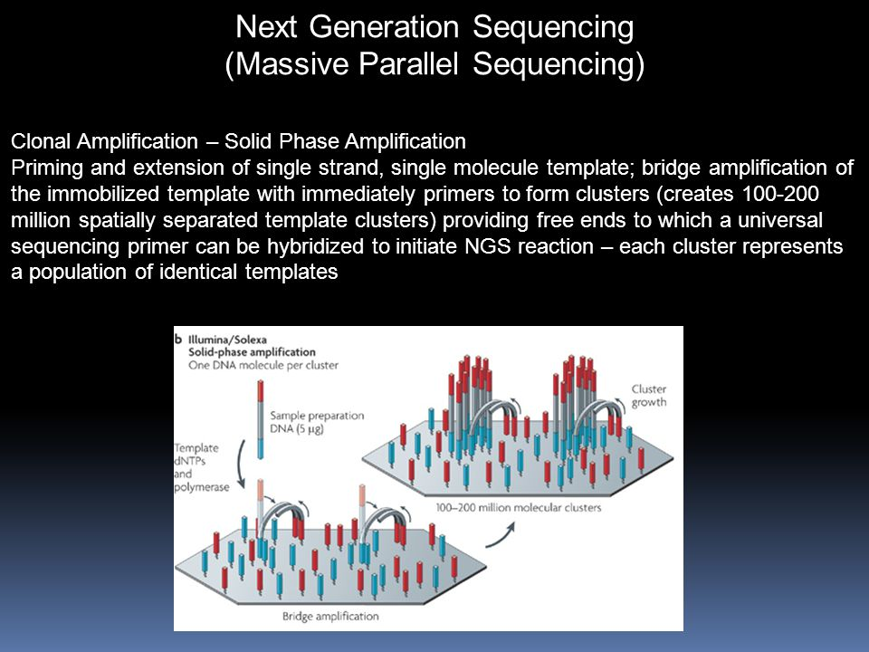 Next Generation Sequencing (Massive Parallel Sequencing) Clonal Amplification – Solid Phase Amplification Priming and extension of single strand, single molecule template; bridge amplification of the immobilized template with immediately primers to form clusters (creates 100-200 million spatially separated template clusters) providing free ends to which a universal sequencing primer can be hybridized to initiate NGS reaction – each cluster represents a population of identical templates