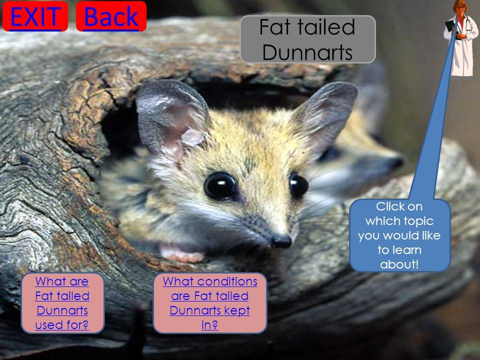 What are Fat tailed Dunnarts used for? What conditions are Fat tailed Dunnarts kept in? Click on which topic you would like to learn about! EXITBack F