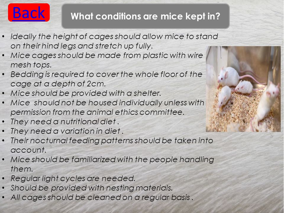 What conditions are mice kept in.