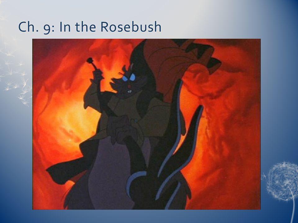 Ch. 9: In the RosebushCh. 9: In the Rosebush