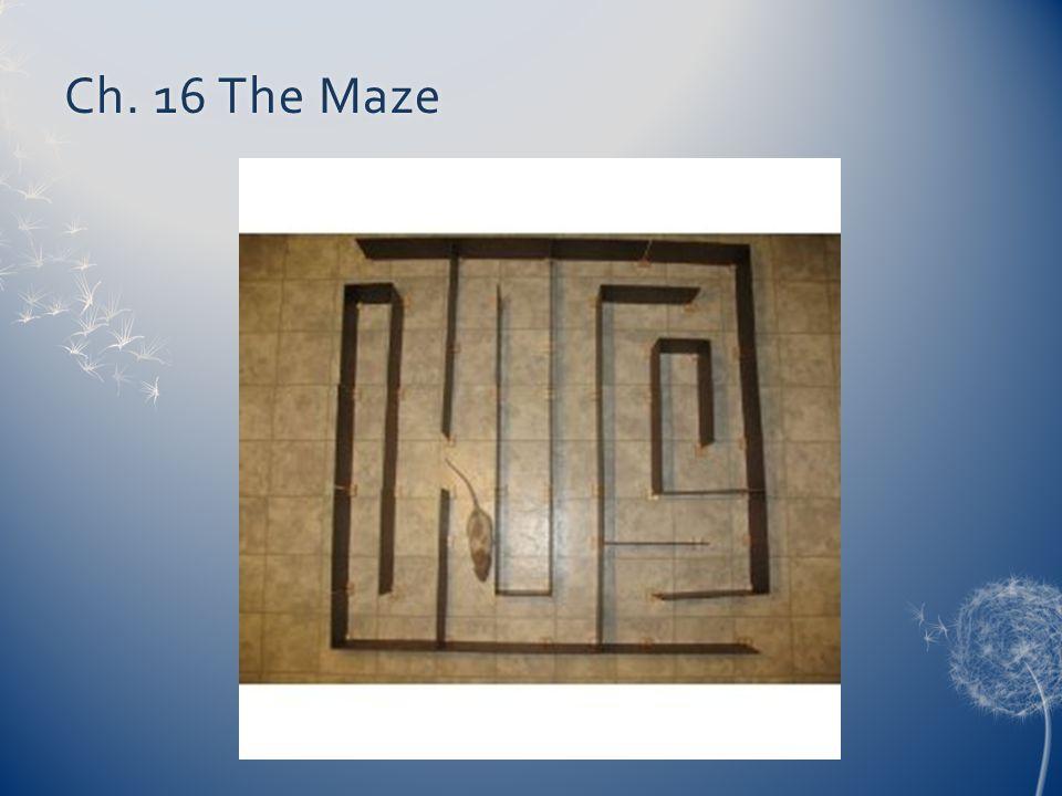 Ch. 16 The MazeCh. 16 The Maze