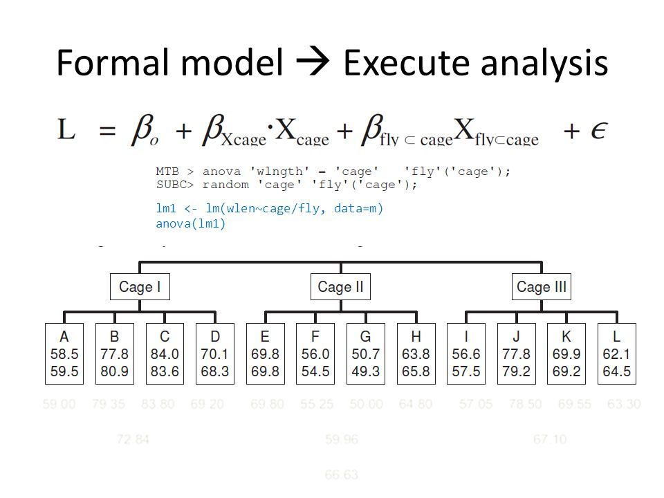 Formal model  Execute analysis lm1 <- lm(wlen~cage/fly, data=m) anova(lm1)