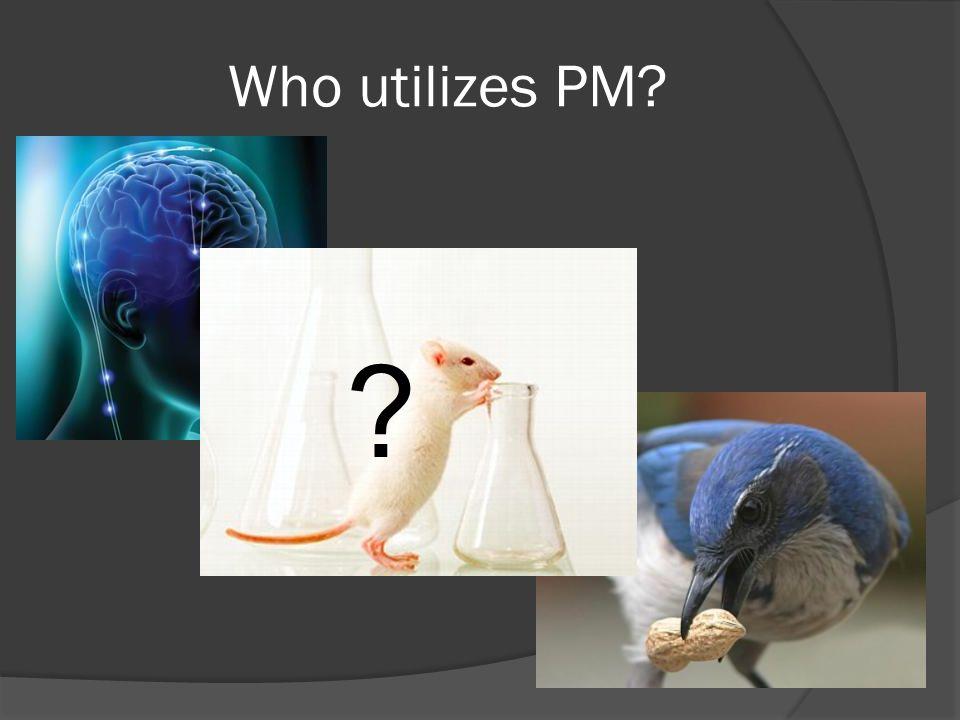 Who utilizes PM