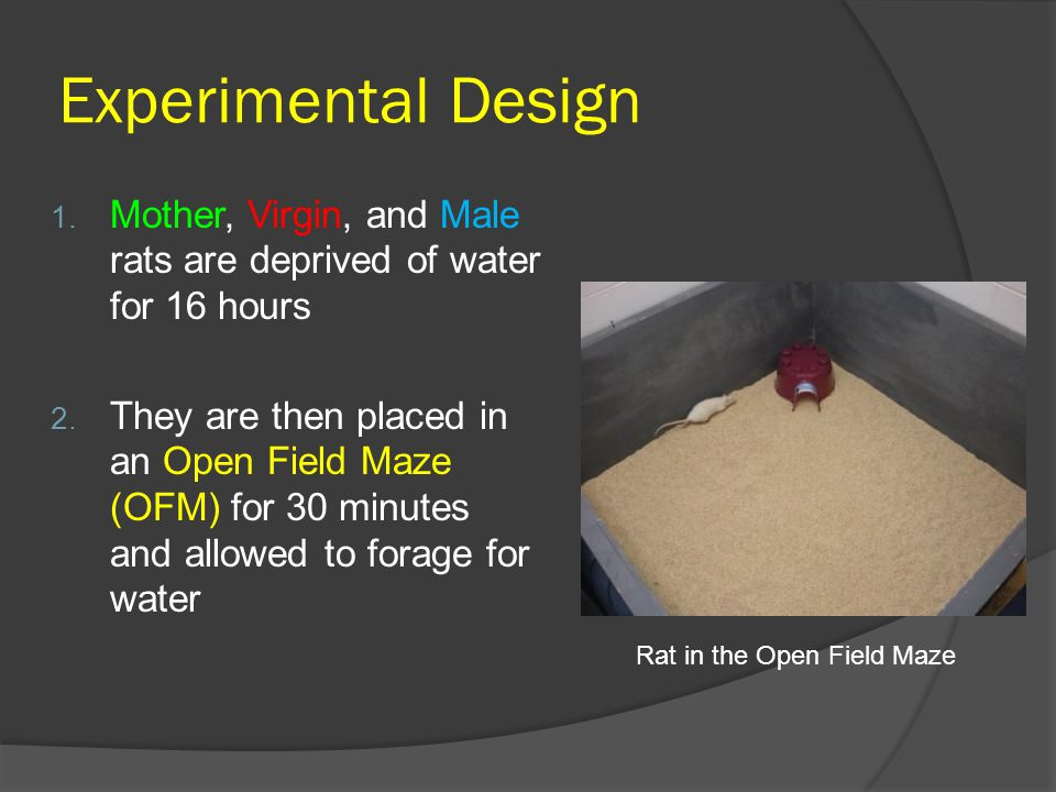Experimental Design 1. Mother, Virgin, and Male rats are deprived of water for 16 hours 2.