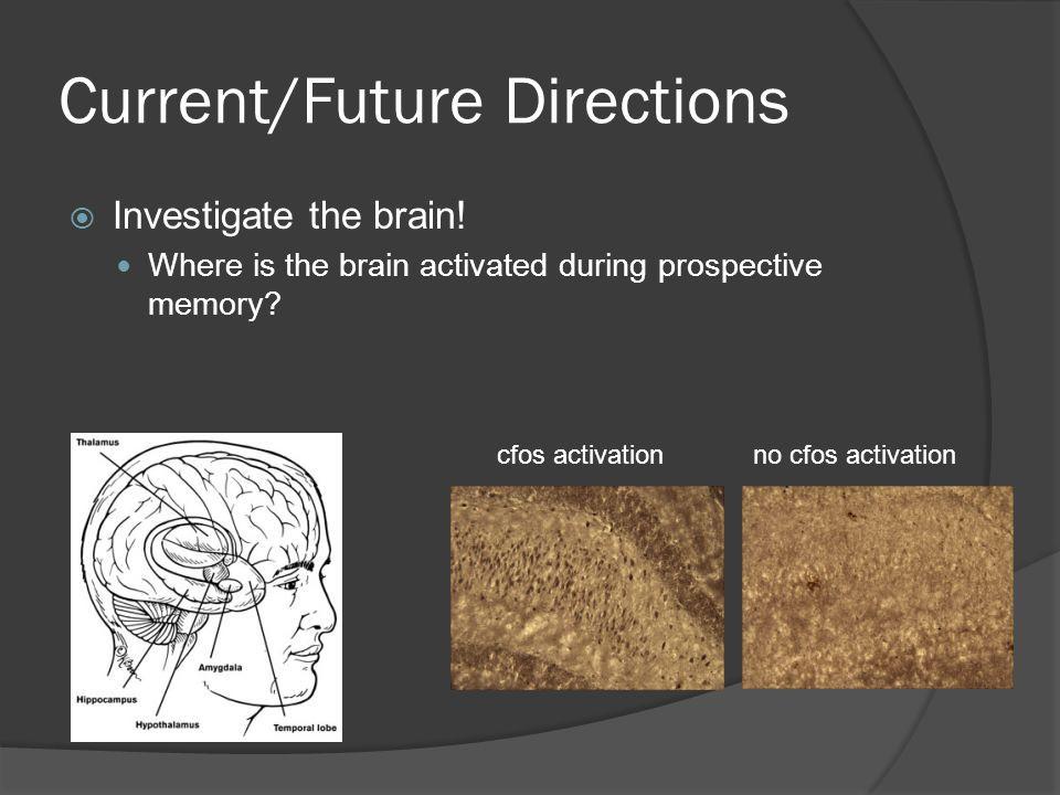 Current/Future Directions  Investigate the brain.