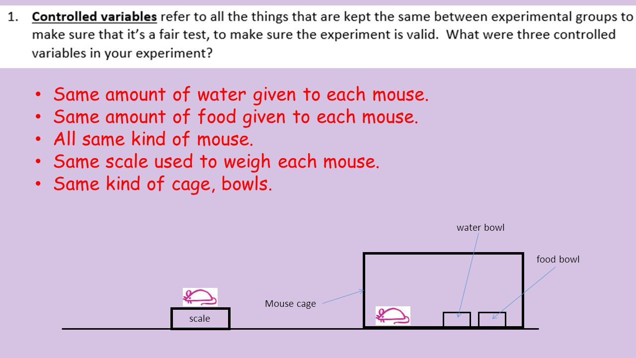 Mouse cage scale food bowl water bowl Yes.All mice getting same treatment.