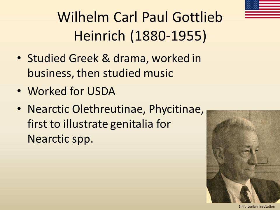 Wilhelm Carl Paul Gottlieb Heinrich (1880-1955) Studied Greek & drama, worked in business, then studied music Worked for USDA Nearctic Olethreutinae, Phycitinae, first to illustrate genitalia for Nearctic spp.