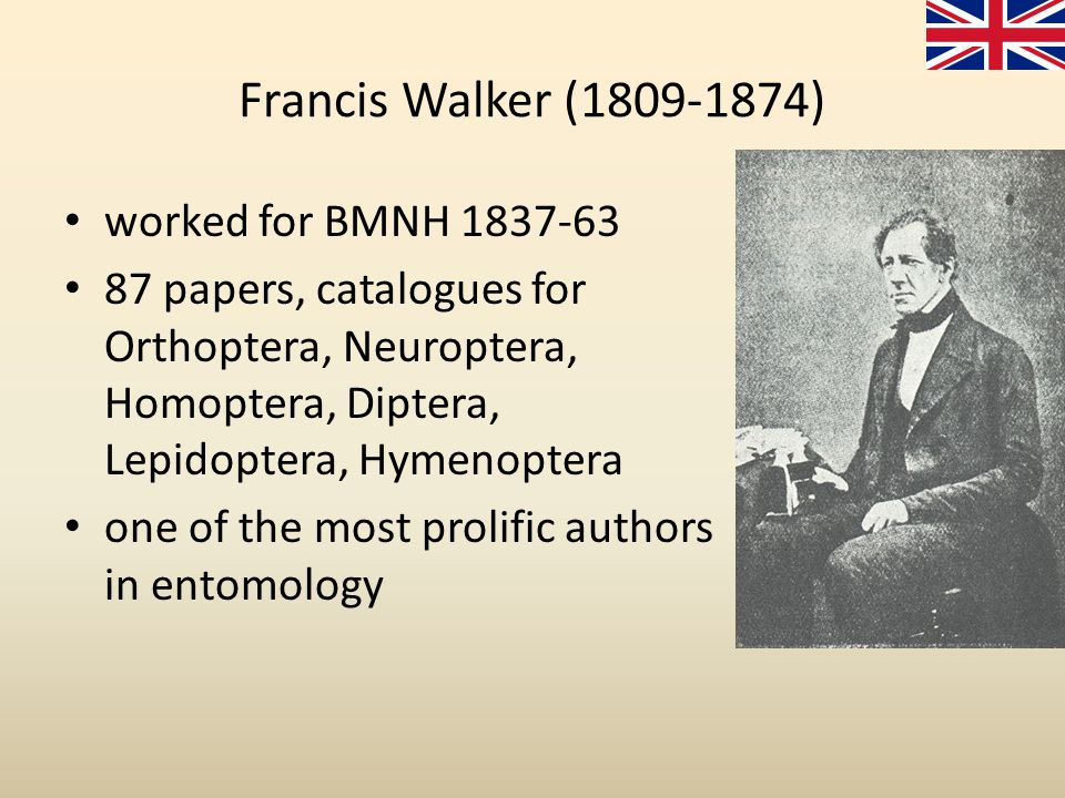 Francis Walker (1809-1874) worked for BMNH 1837-63 87 papers, catalogues for Orthoptera, Neuroptera, Homoptera, Diptera, Lepidoptera, Hymenoptera one