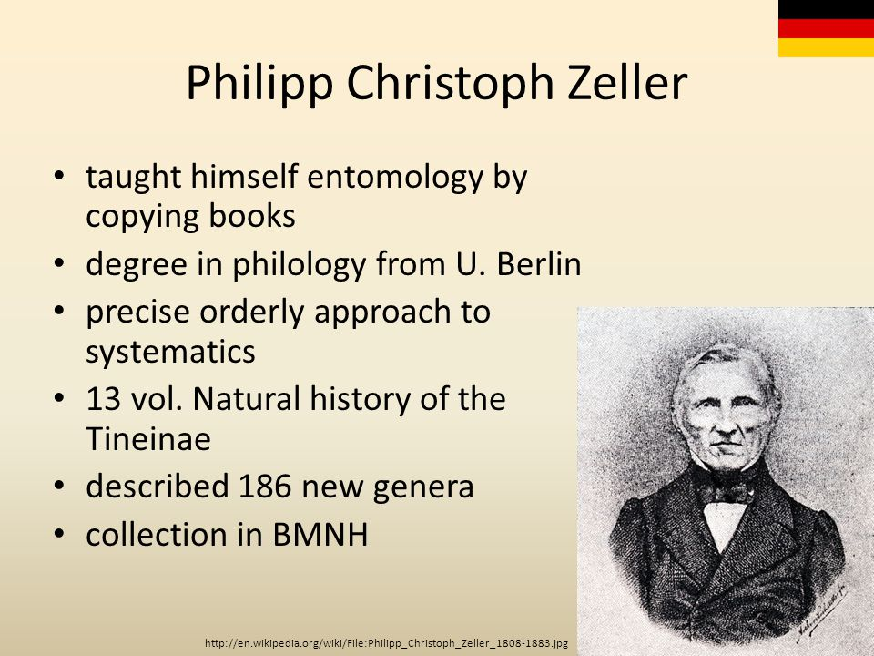 Philipp Christoph Zeller taught himself entomology by copying books degree in philology from U. Berlin precise orderly approach to systematics 13 vol.