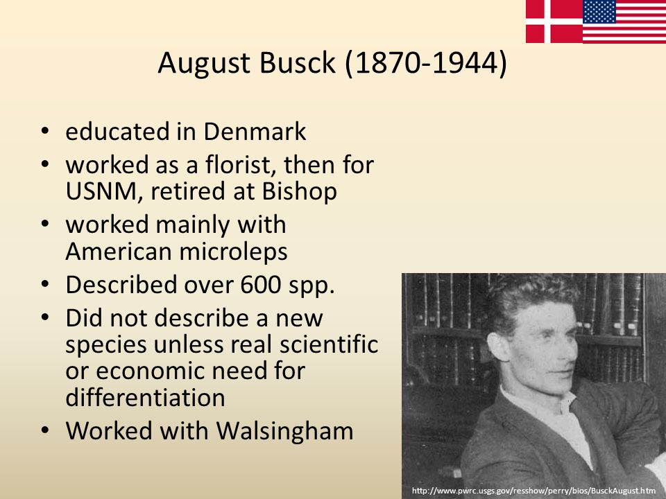 August Busck (1870-1944) educated in Denmark worked as a florist, then for USNM, retired at Bishop worked mainly with American microleps Described ove