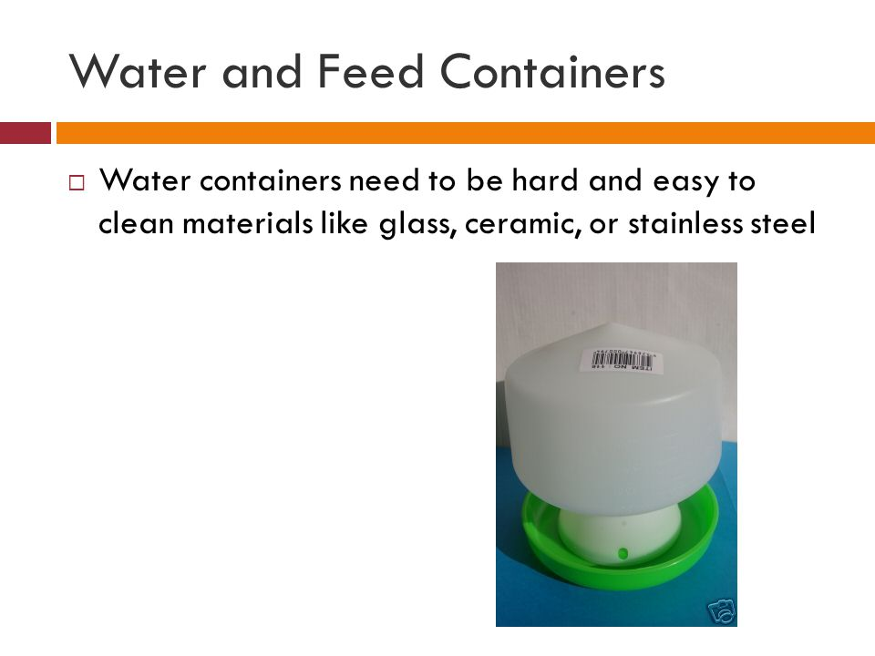 Water and Feed Containers  Water containers need to be hard and easy to clean materials like glass, ceramic, or stainless steel