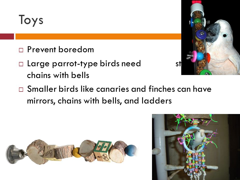 Toys  Prevent boredom  Large parrot-type birds need stainless-steel chains with bells  Smaller birds like canaries and finches can have mirrors, ch