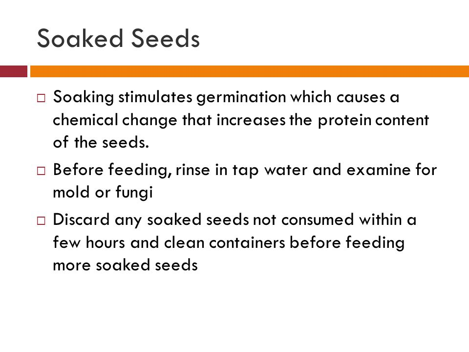 Soaked Seeds  Soaking stimulates germination which causes a chemical change that increases the protein content of the seeds.  Before feeding, rinse