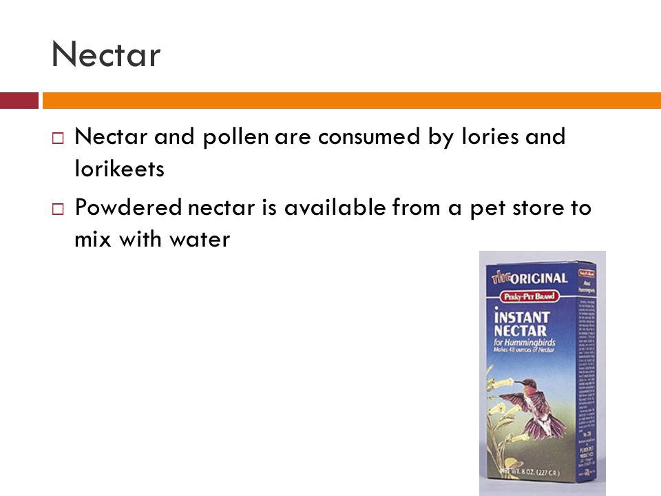 Nectar  Nectar and pollen are consumed by lories and lorikeets  Powdered nectar is available from a pet store to mix with water