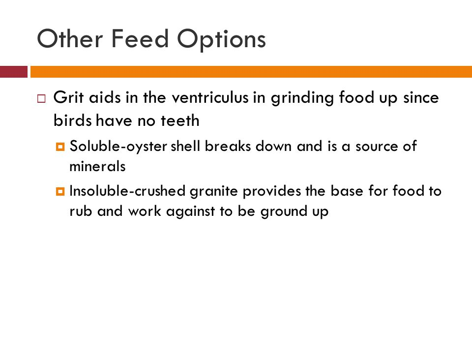Other Feed Options  Grit aids in the ventriculus in grinding food up since birds have no teeth  Soluble-oyster shell breaks down and is a source of