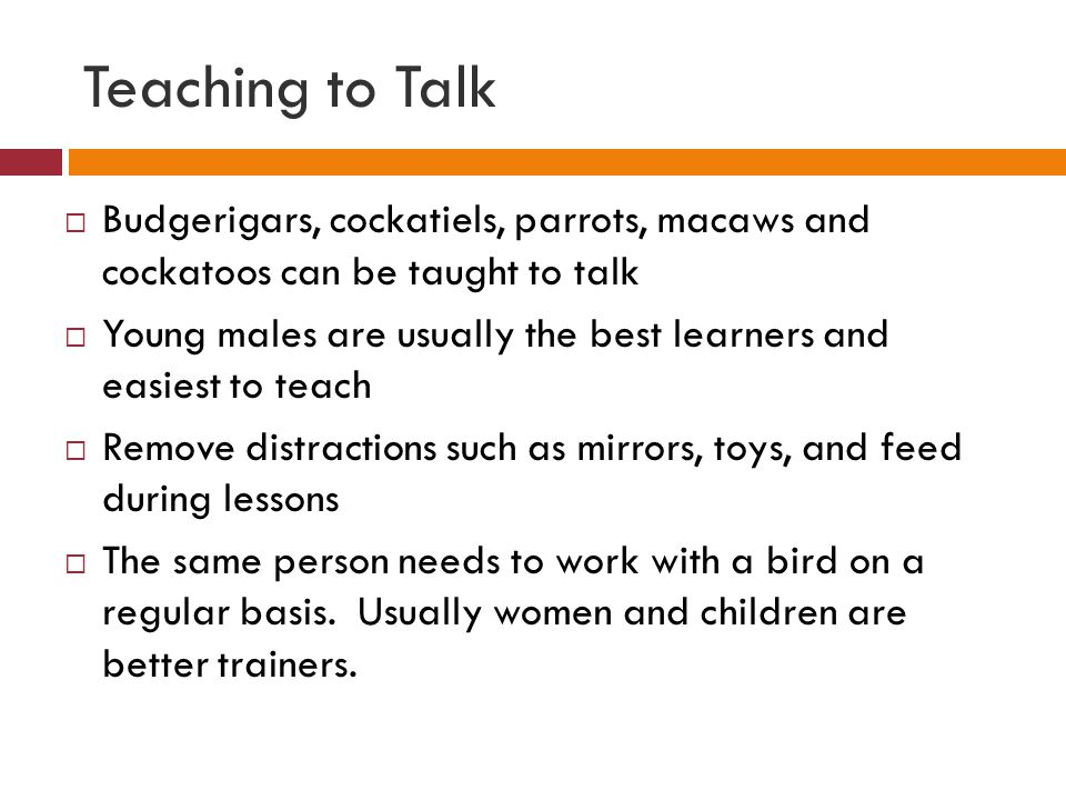 Teaching to Talk  Budgerigars, cockatiels, parrots, macaws and cockatoos can be taught to talk  Young males are usually the best learners and easies