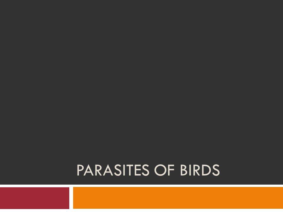 PARASITES OF BIRDS