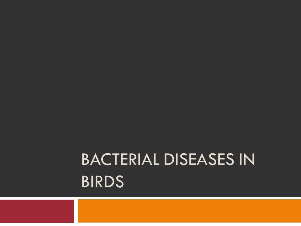 BACTERIAL DISEASES IN BIRDS