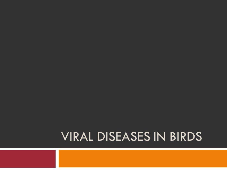VIRAL DISEASES IN BIRDS