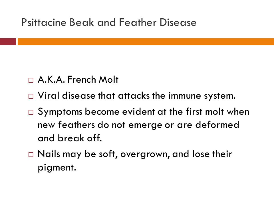 Psittacine Beak and Feather Disease  A.K.A. French Molt  Viral disease that attacks the immune system.  Symptoms become evident at the first molt w
