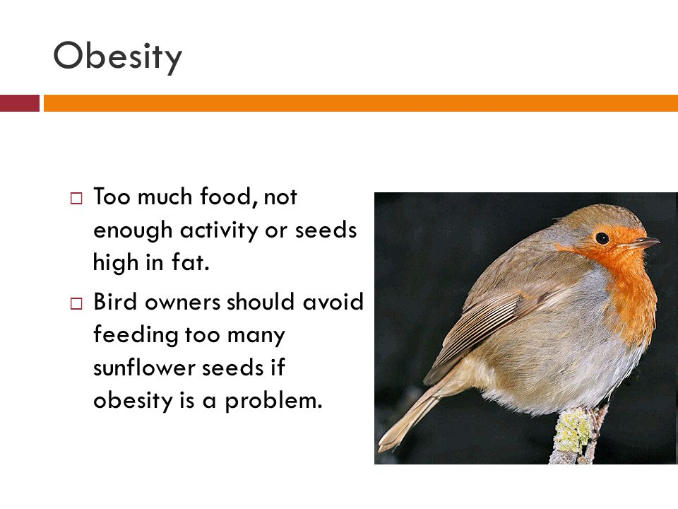 Obesity  Too much food, not enough activity or seeds high in fat.  Bird owners should avoid feeding too many sunflower seeds if obesity is a problem