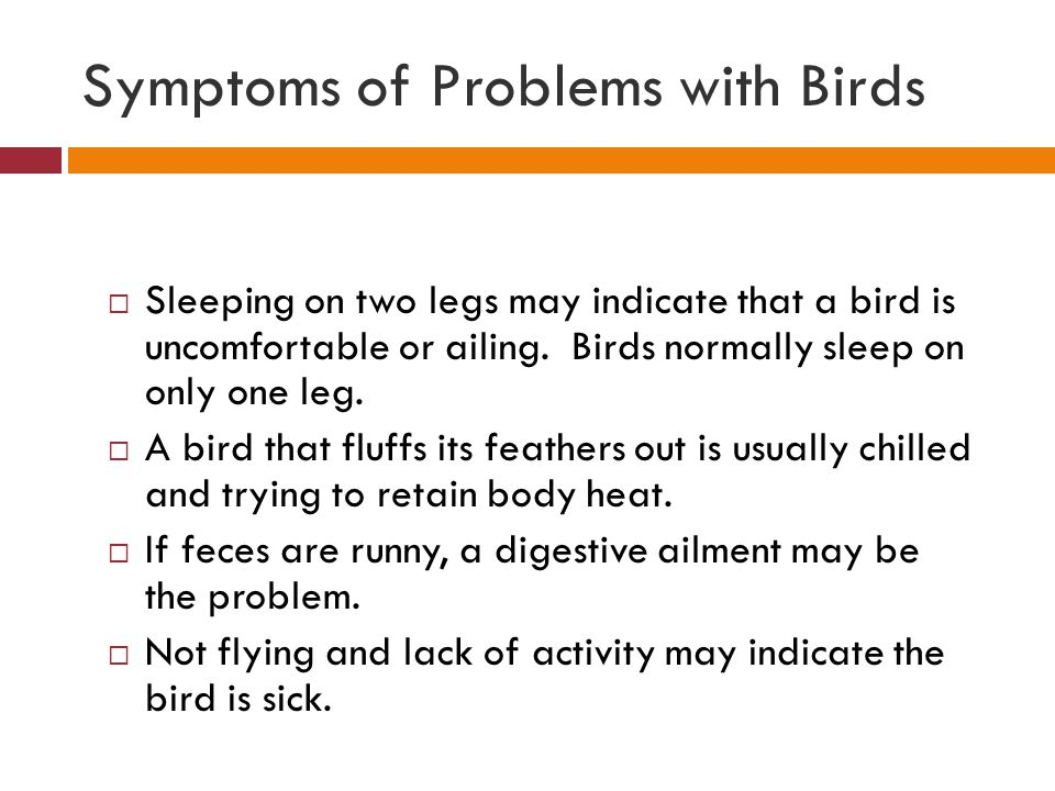 Symptoms of Problems with Birds  Sleeping on two legs may indicate that a bird is uncomfortable or ailing. Birds normally sleep on only one leg.  A