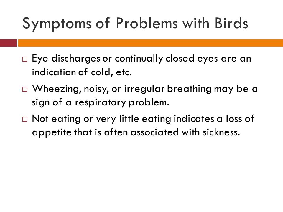 Symptoms of Problems with Birds  Eye discharges or continually closed eyes are an indication of cold, etc.  Wheezing, noisy, or irregular breathing