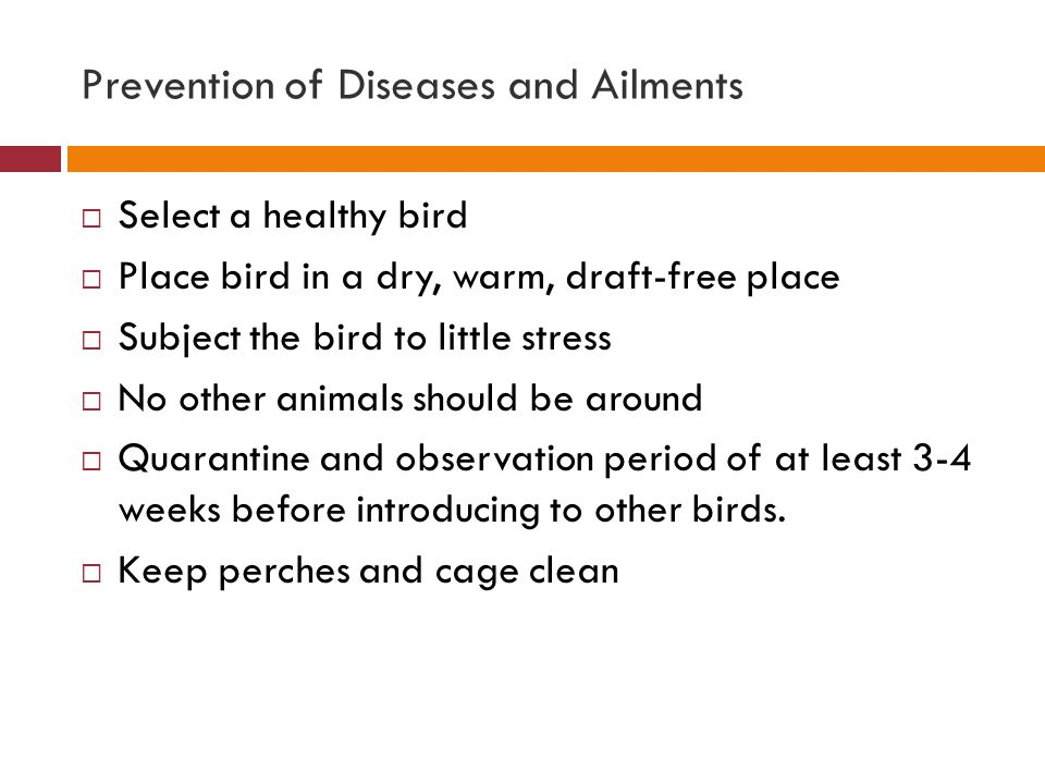Prevention of Diseases and Ailments  Select a healthy bird  Place bird in a dry, warm, draft-free place  Subject the bird to little stress  No oth