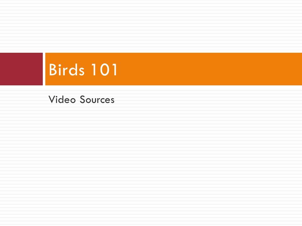 Video Sources Birds 101