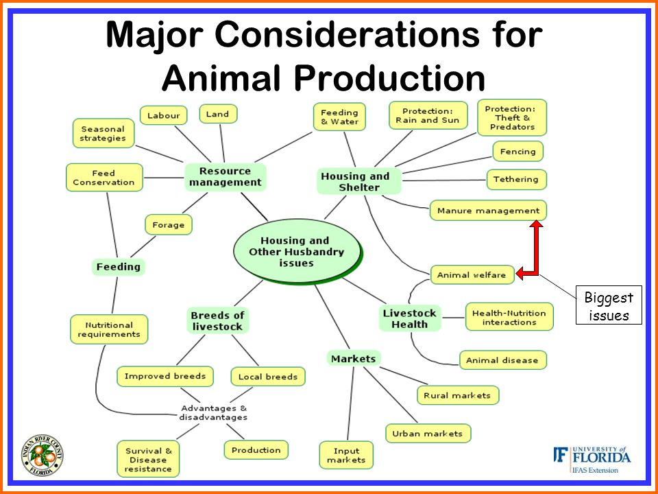 Major Considerations for Animal Production Biggest issues