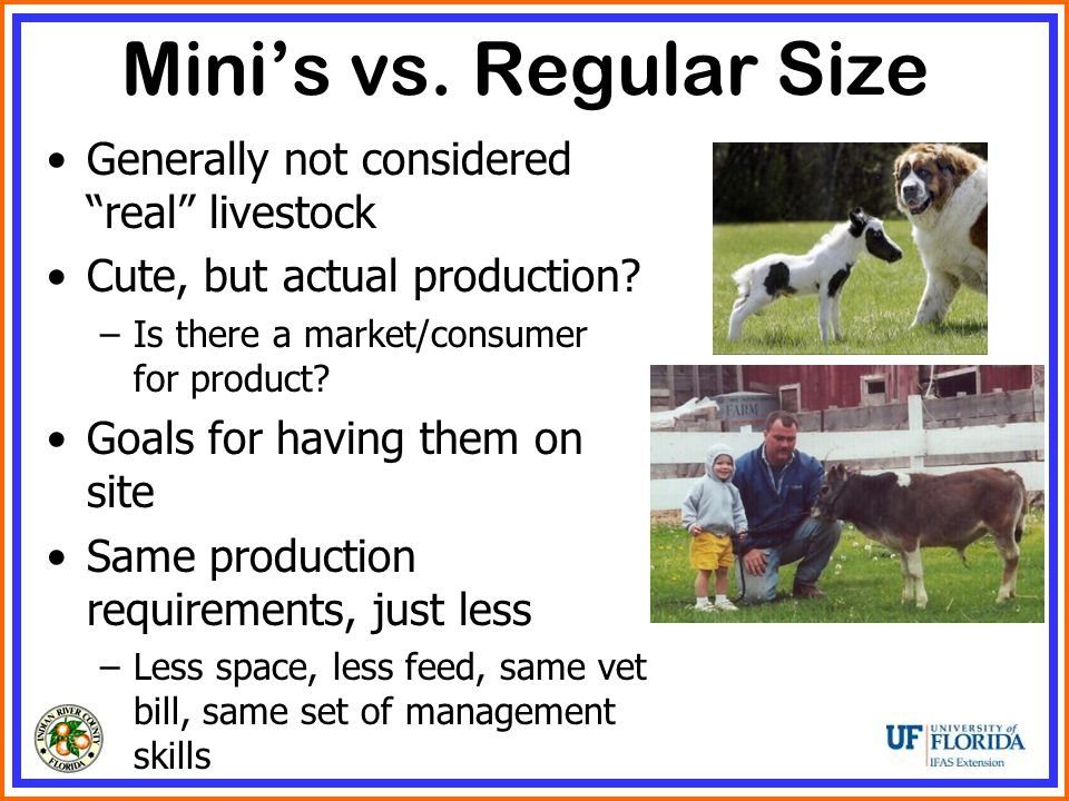 Mini's vs. Regular Size Generally not considered real livestock Cute, but actual production.