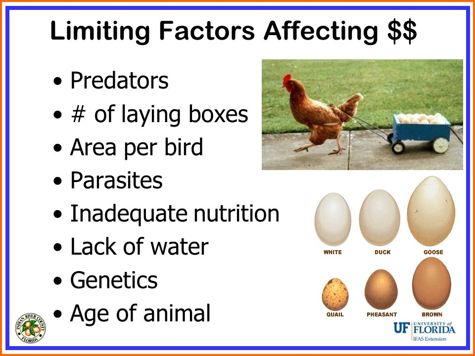 Limiting Factors Affecting $$ Predators # of laying boxes Area per bird Parasites Inadequate nutrition Lack of water Genetics Age of animal